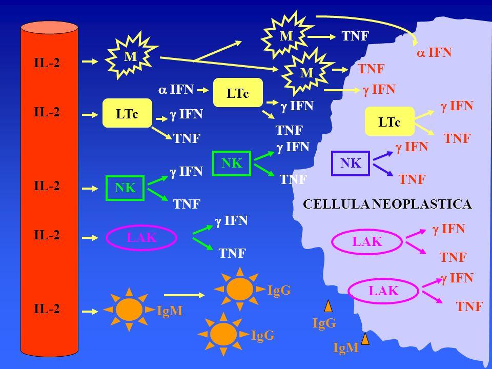 M IL-2 TNF M a IFN M TNF a IFN LTc g IFN TNF g IFN g IFN LTc g IFN LTc