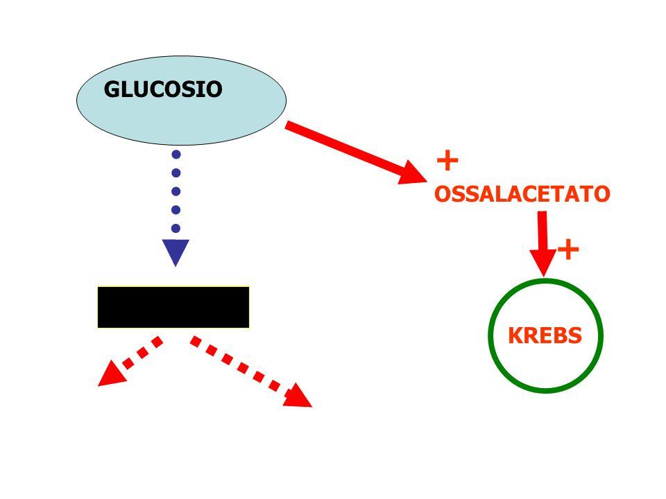 GLUCOSIO + OSSALACETATO + KREBS