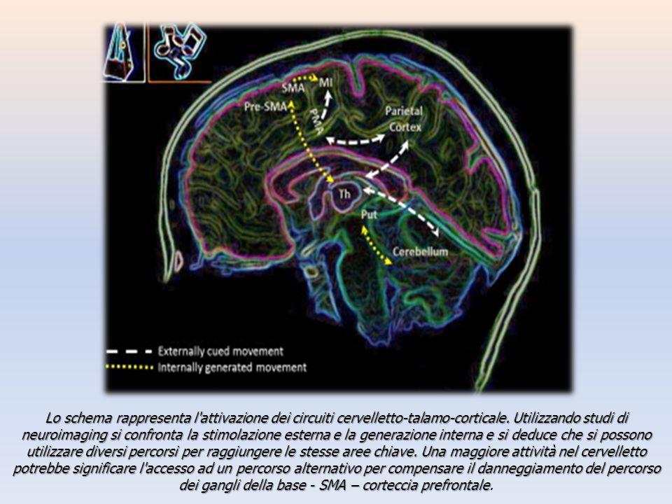 Lo schema rappresenta l attivazione dei circuiti cervelletto-talamo-corticale.