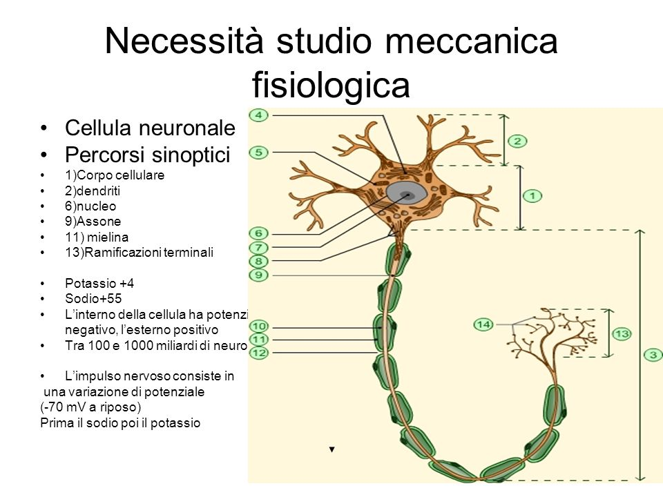 Necessità studio meccanica fisiologica