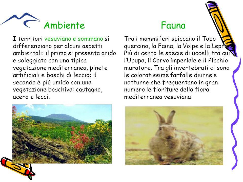 Ambiente Fauna.