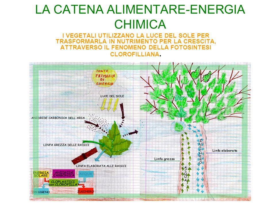 LA CATENA ALIMENTARE-ENERGIA CHIMICA