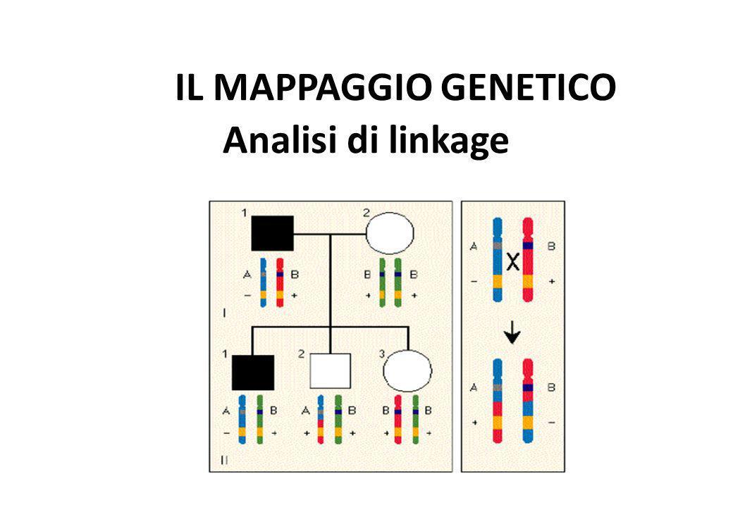 IL MAPPAGGIO GENETICO Analisi di linkage