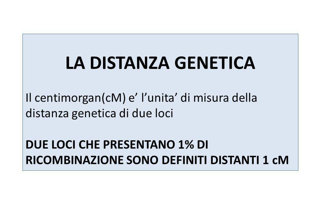 LA DISTANZA GENETICA Il centimorgan(cM) e' l'unita' di misura della distanza genetica di due loci.