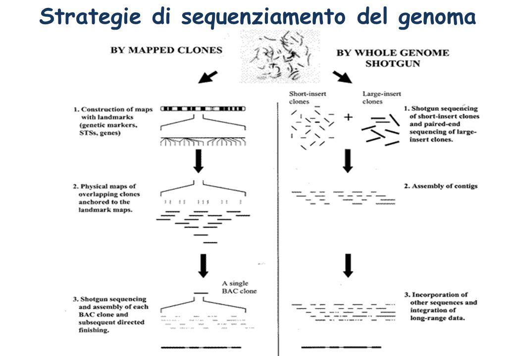 Strategie di sequenziamento del genoma