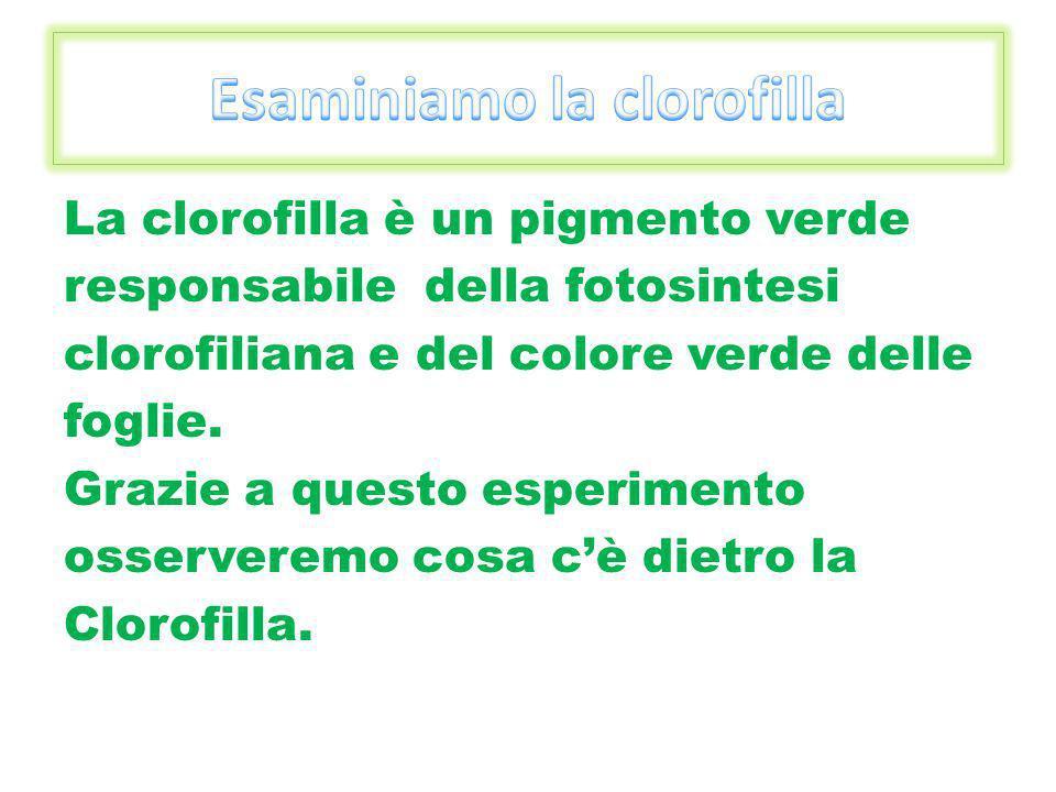 Esaminiamo la clorofilla