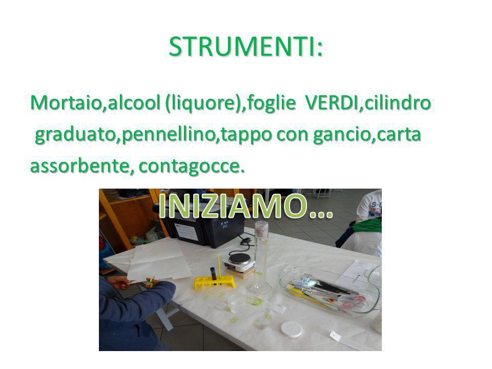 STRUMENTI: Mortaio,alcool (liquore),foglie VERDI,cilindro graduato,pennellino,tappo con gancio,carta assorbente, contagocce.