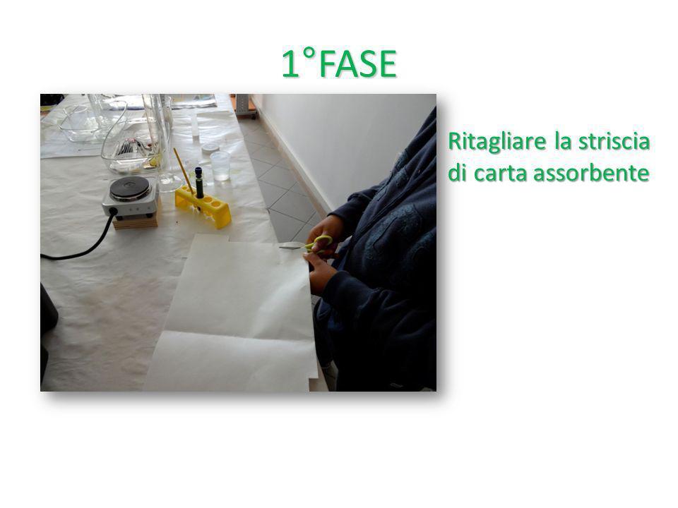 1°FASE Ritagliare la striscia di carta assorbente