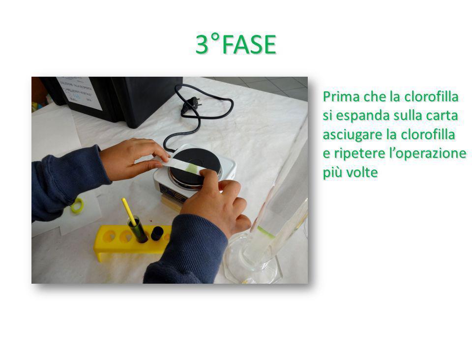 3°FASE Prima che la clorofilla si espanda sulla carta asciugare la clorofilla e ripetere l'operazione più volte.