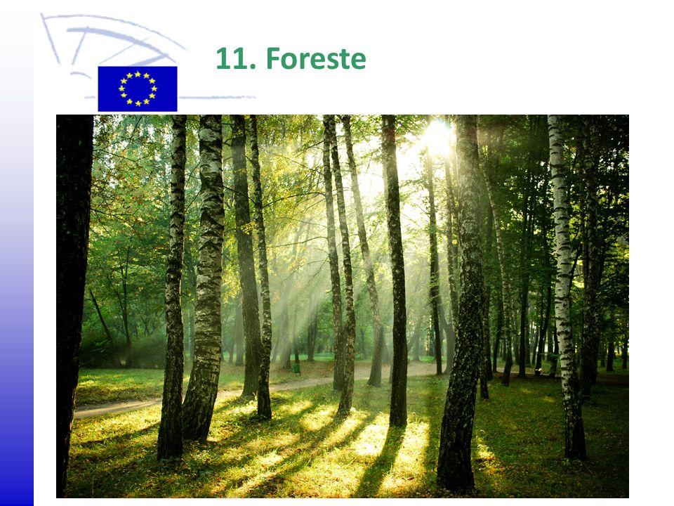 Agrarumweltprogramm 11. Foreste