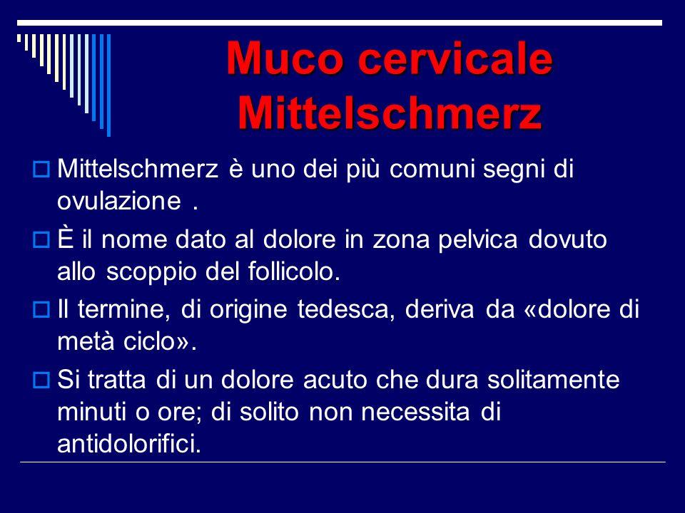 Muco cervicale Mittelschmerz