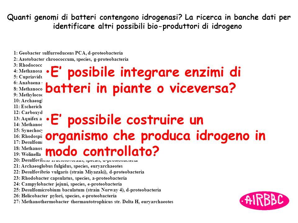 identificare altri possibili bio-produttori di idrogeno