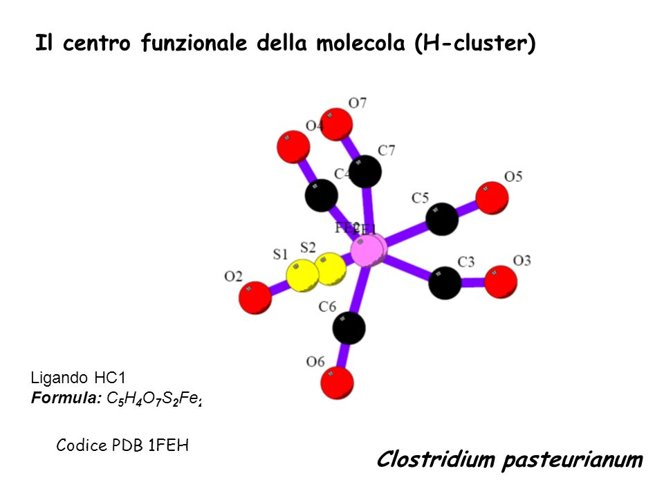 Il centro funzionale della molecola (H-cluster)