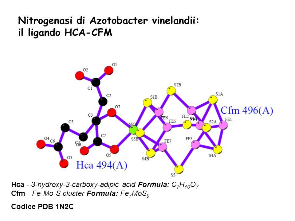 Nitrogenasi di Azotobacter vinelandii: il ligando HCA-CFM