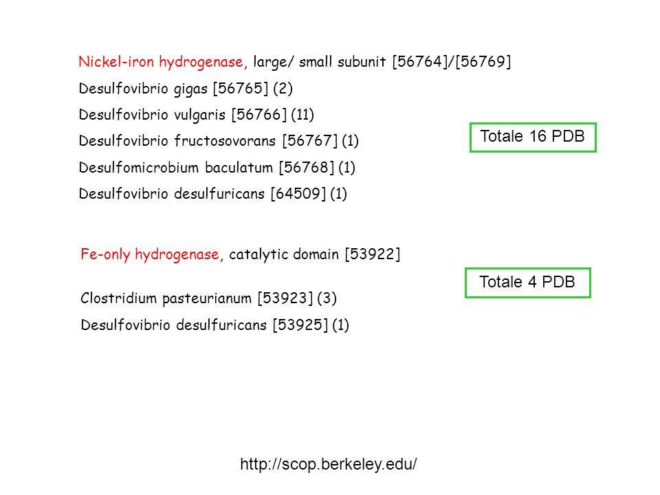 Totale 16 PDB Totale 4 PDB http://scop.berkeley.edu/