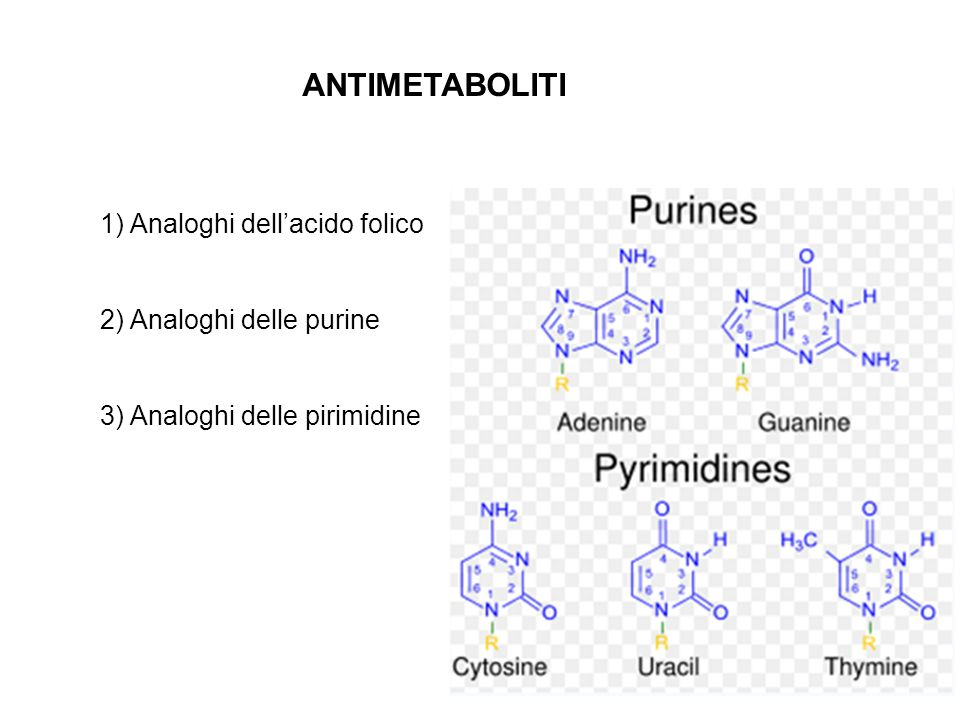 ANTIMETABOLITI 1) Analoghi dell'acido folico 2) Analoghi delle purine