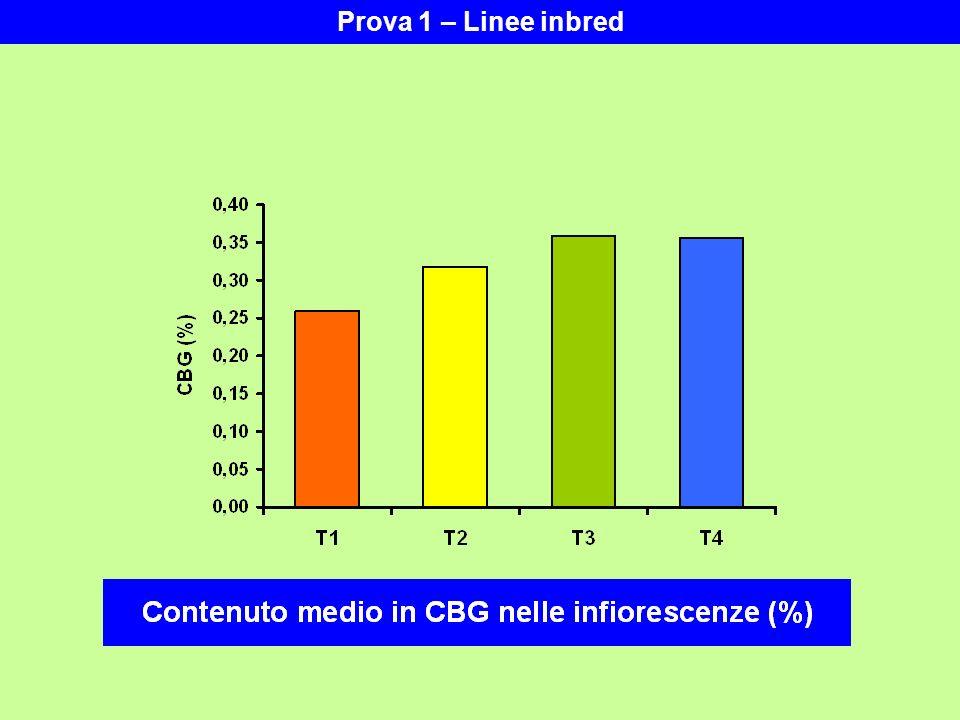 Prova 1 – Linee inbred