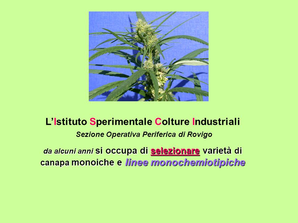 L'Istituto Sperimentale Colture Industriali