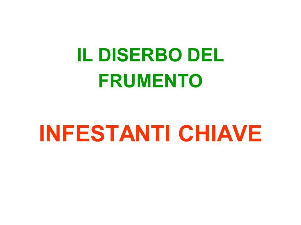 IL DISERBO DEL FRUMENTO INFESTANTI CHIAVE