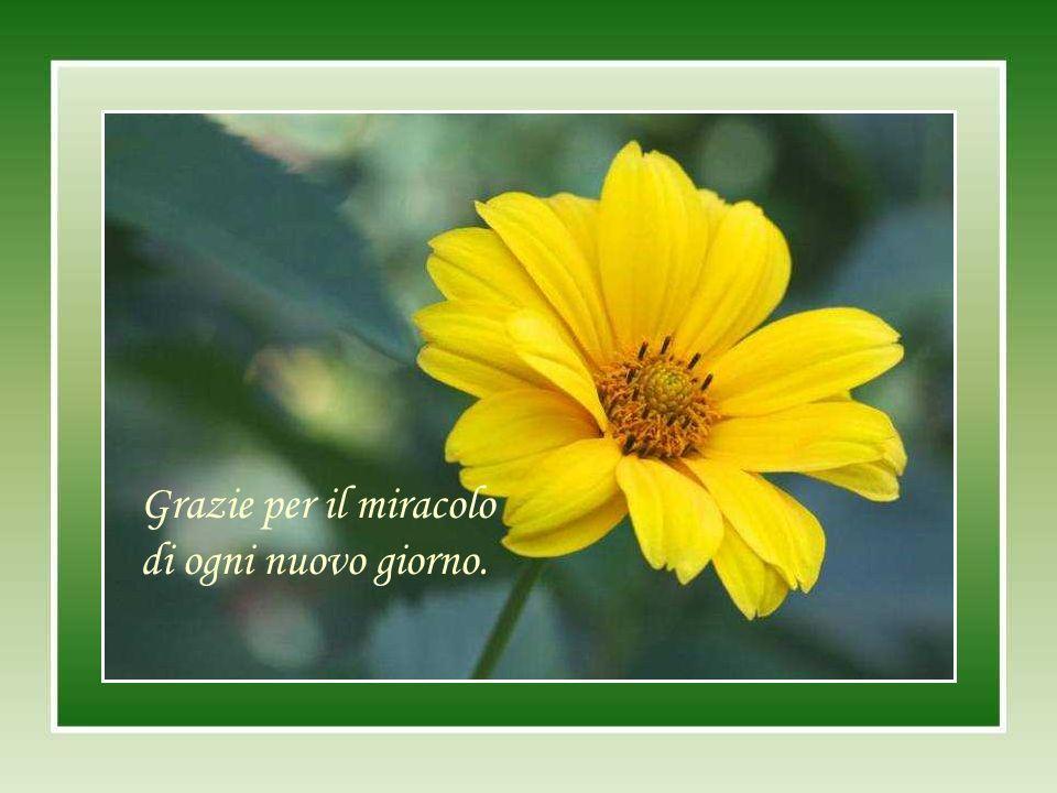 Grazie per il miracolo di ogni nuovo giorno.