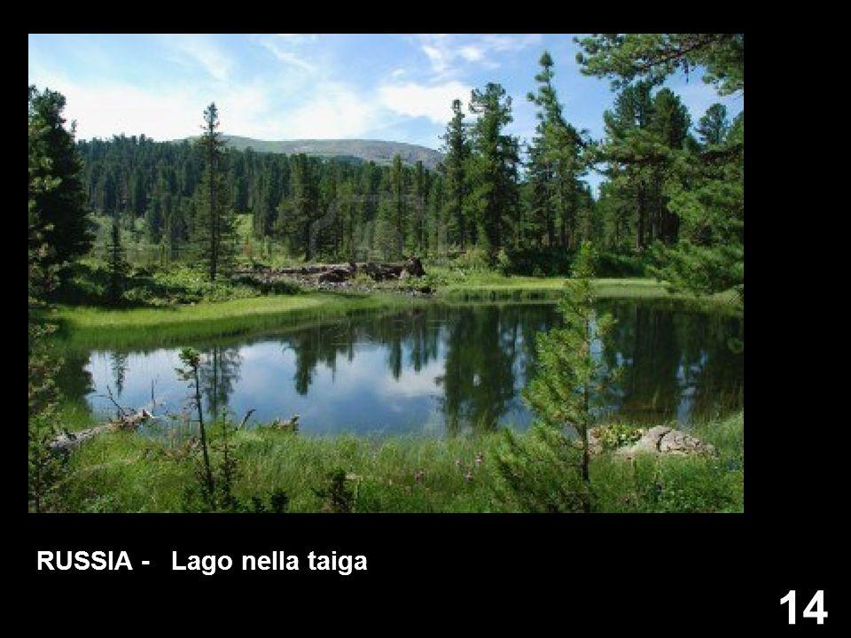 RUSSIA - Lago nella taiga