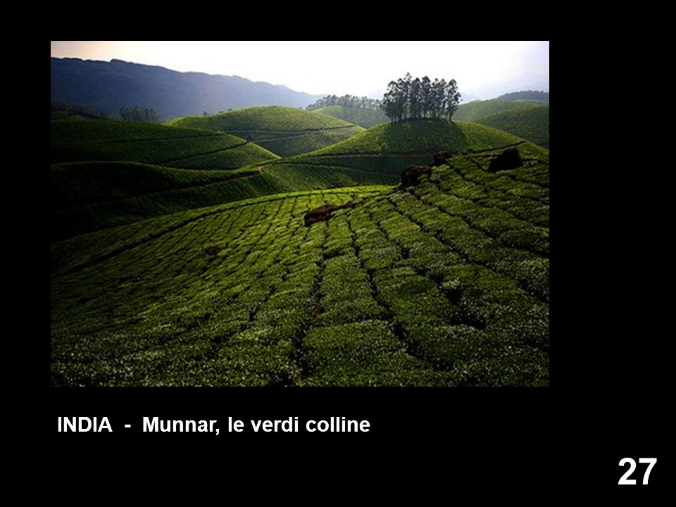 INDIA - Munnar, le verdi colline