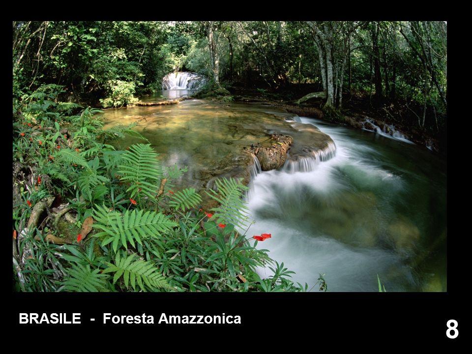 BRASILE - Foresta Amazzonica