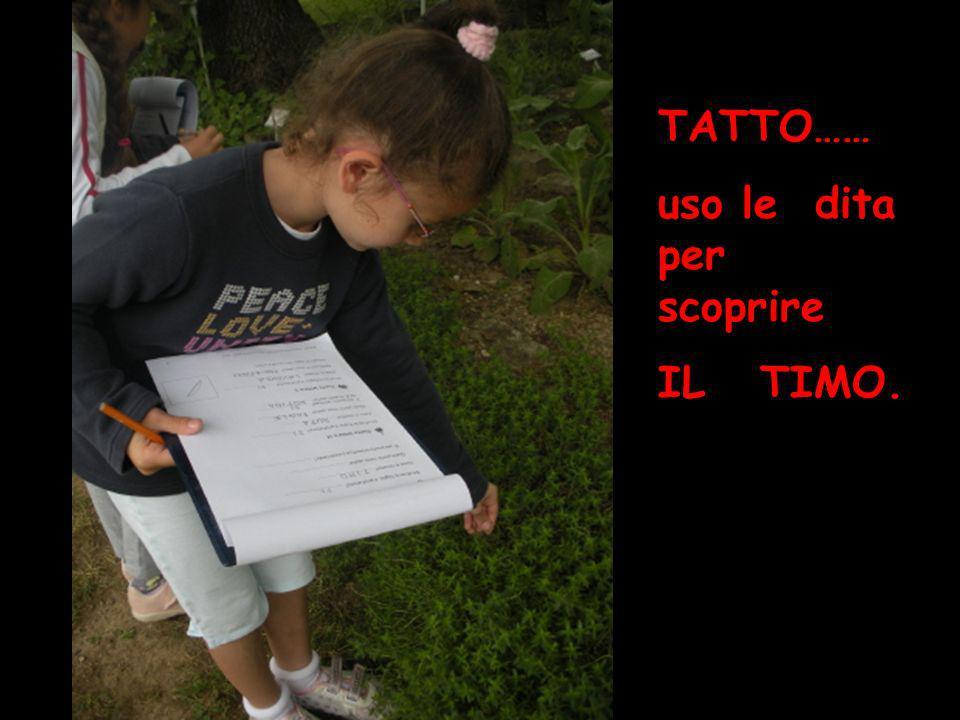 TATTO…… uso le dita per scoprire IL TIMO. tatto