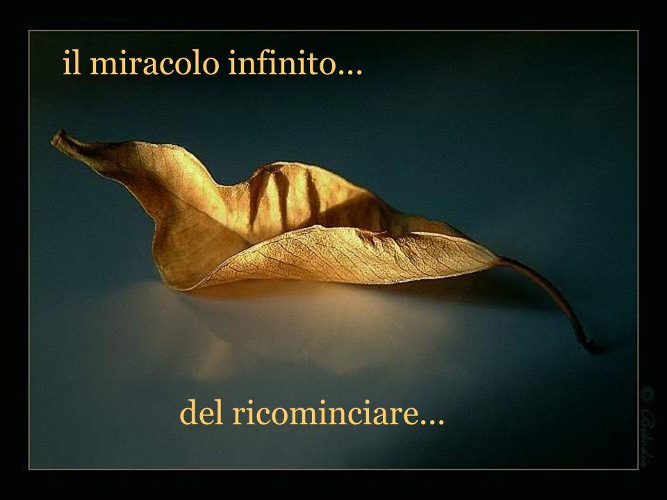 il miracolo infinito... del ricominciare...
