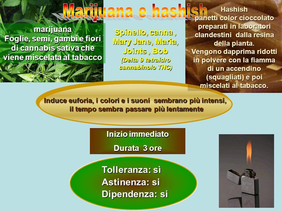 Marijuana e hashish Tolleranza: sì Astinenza: si Dipendenza: si