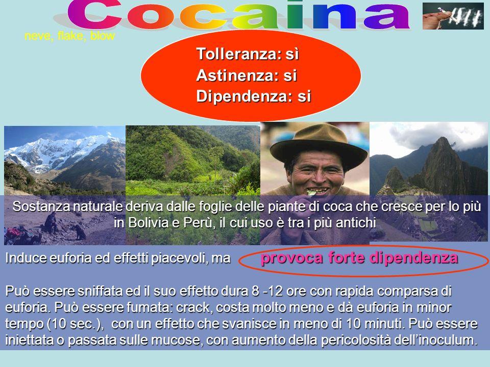Cocaina Tolleranza: sì Astinenza: si Dipendenza: si