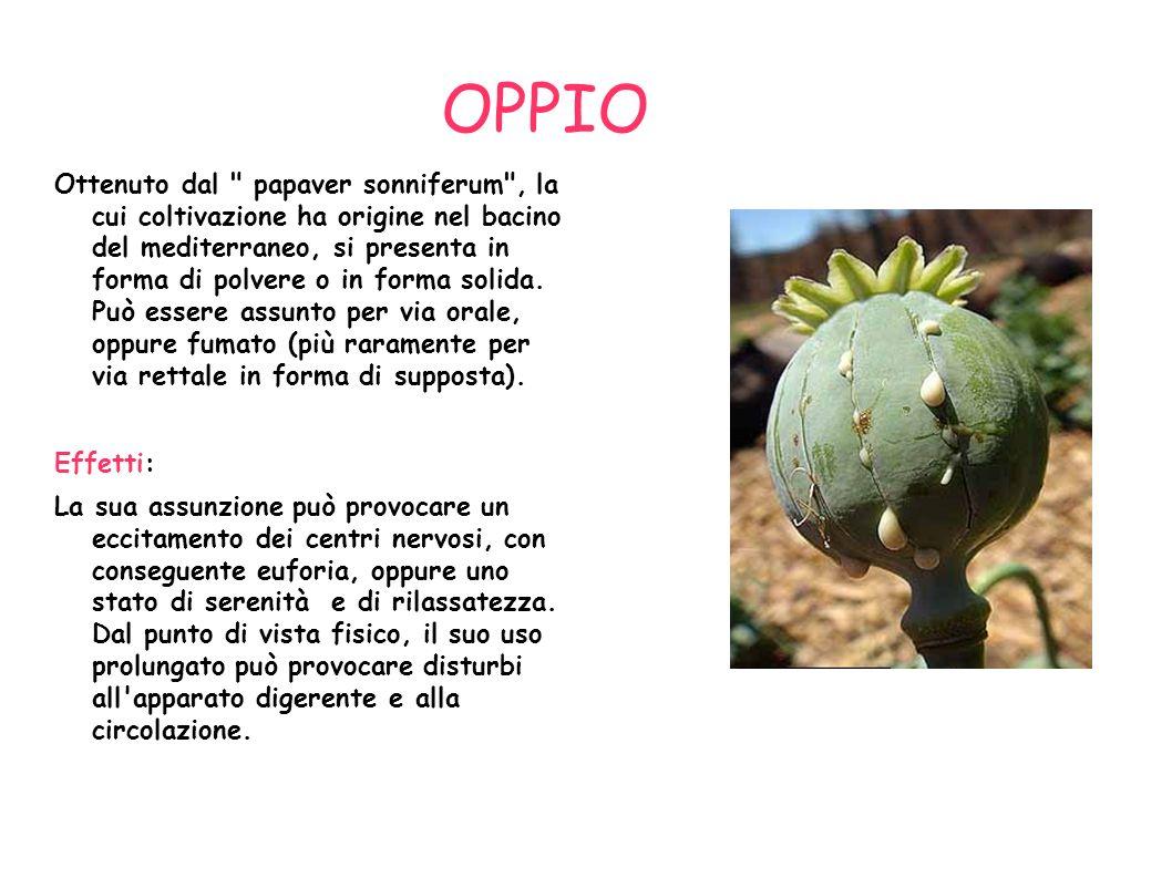 OPPIO