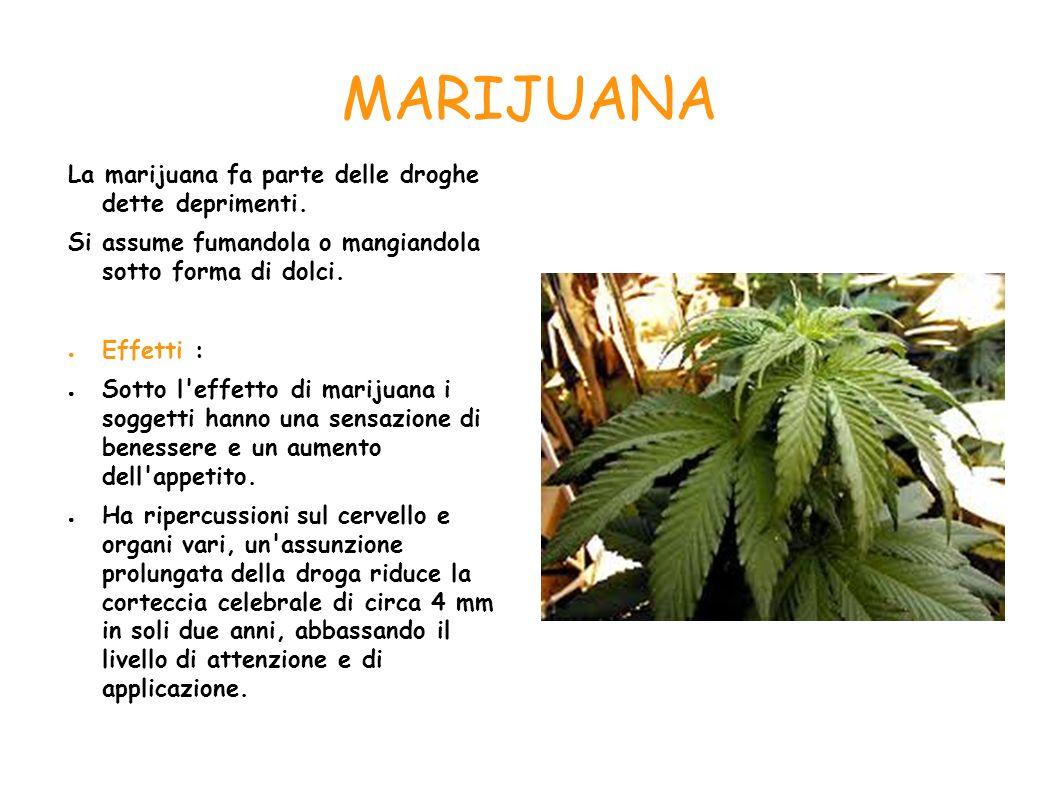 MARIJUANA La marijuana fa parte delle droghe dette deprimenti.