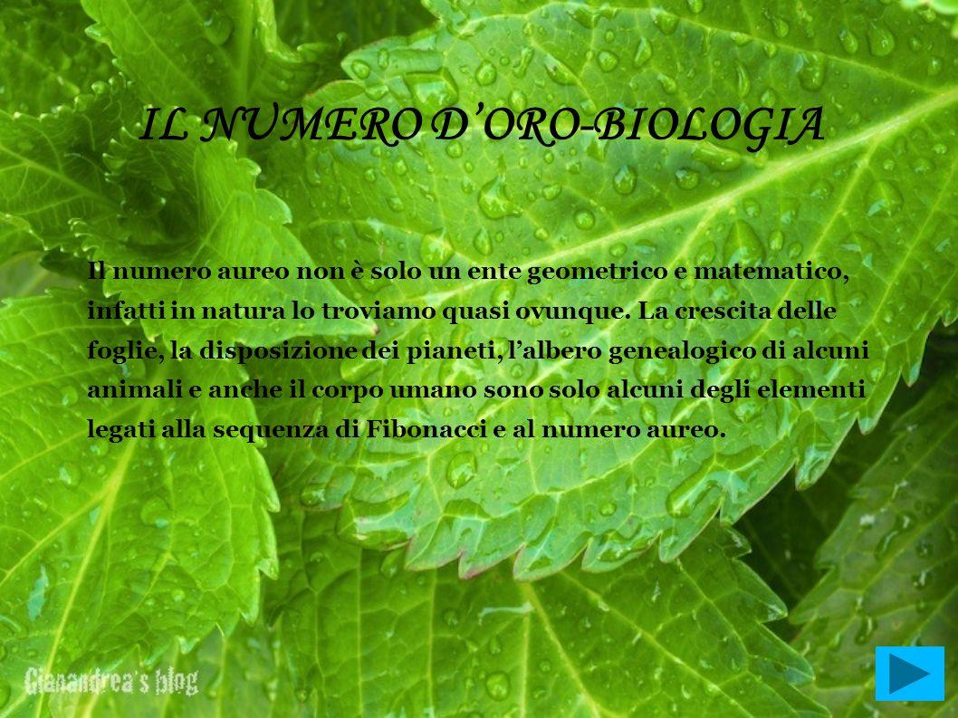 IL NUMERO D'ORO-BIOLOGIA