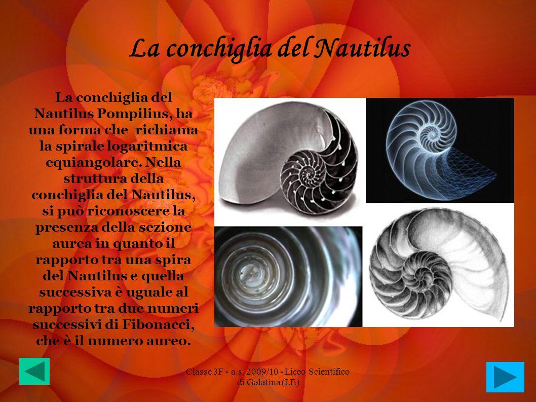 La conchiglia del Nautilus