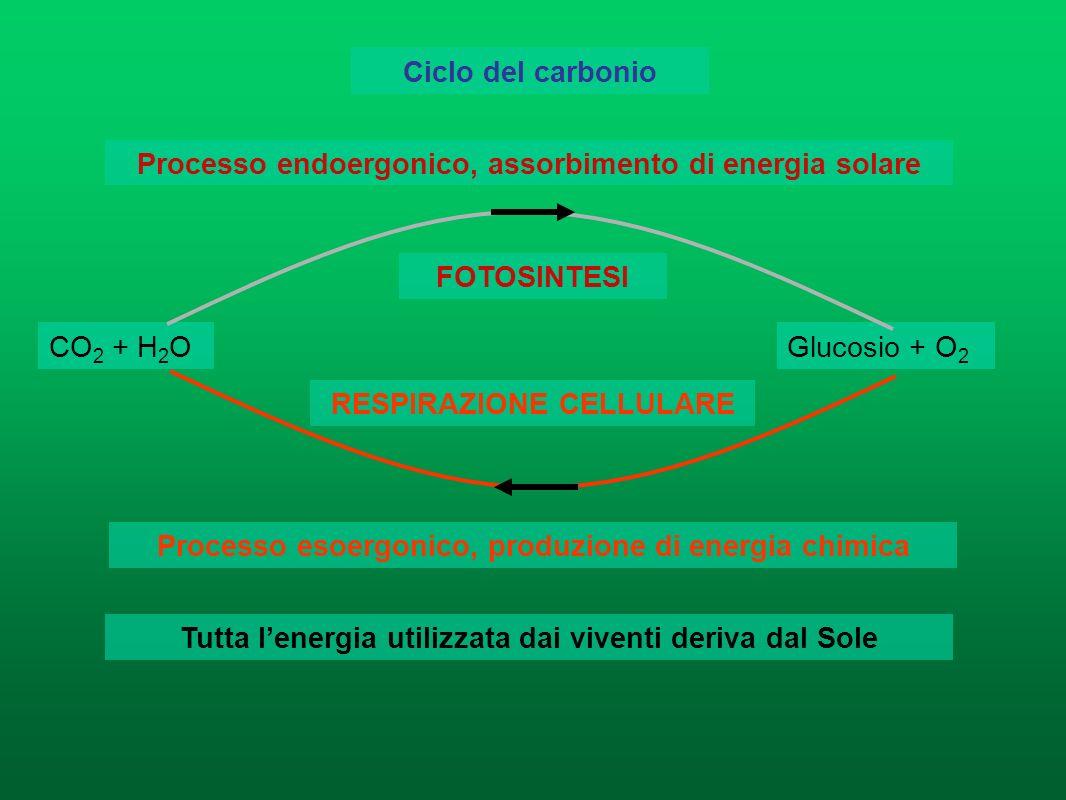 Processo endoergonico, assorbimento di energia solare