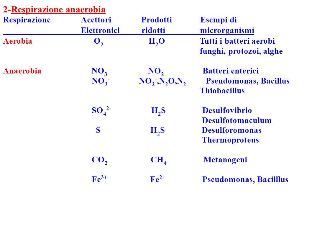 2-Respirazione anaerobia Elettronici ridotti microrganismi