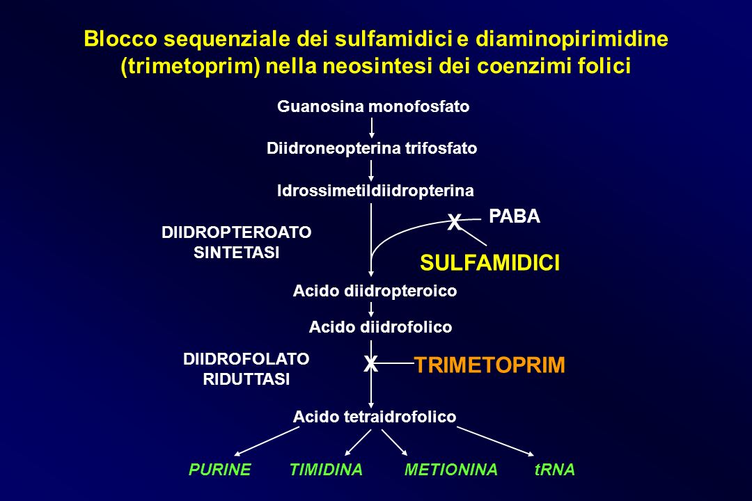 Blocco sequenziale dei sulfamidici e diaminopirimidine (trimetoprim) nella neosintesi dei coenzimi folici