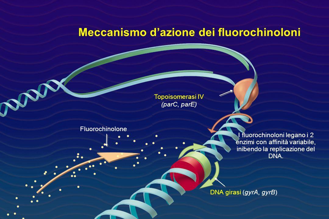 Meccanismo d'azione dei fluorochinoloni