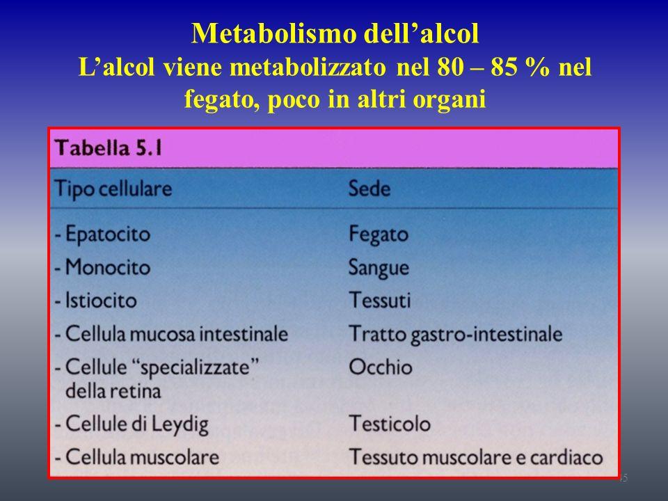 Metabolismo dell'alcol L'alcol viene metabolizzato nel 80 – 85 % nel fegato, poco in altri organi