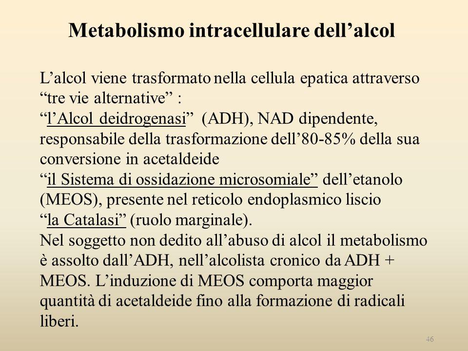 Metabolismo intracellulare dell'alcol L'alcol viene trasformato nella cellula epatica attraverso tre vie alternative : l'Alcol deidrogenasi (ADH), NAD dipendente, responsabile della trasformazione dell'80-85% della sua conversione in acetaldeide il Sistema di ossidazione microsomiale dell'etanolo (MEOS), presente nel reticolo endoplasmico liscio la Catalasi (ruolo marginale).