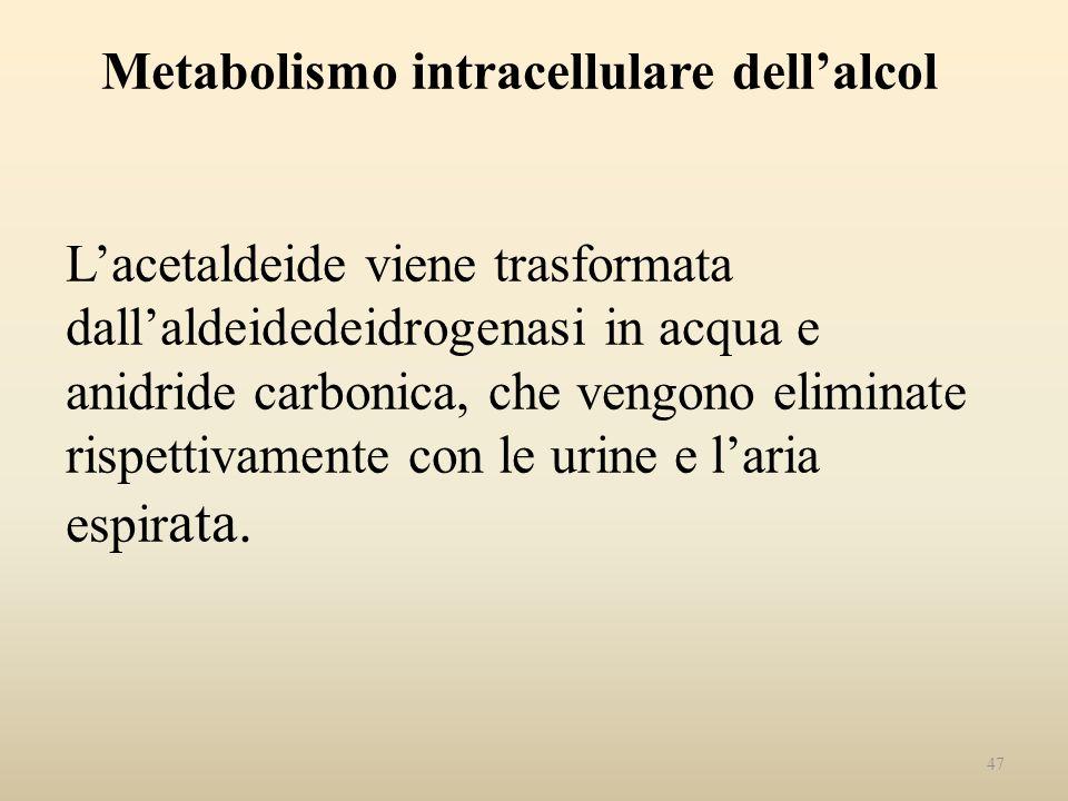 Metabolismo intracellulare dell'alcol L'acetaldeide viene trasformata dall'aldeidedeidrogenasi in acqua e anidride carbonica, che vengono eliminate rispettivamente con le urine e l'aria espirata.