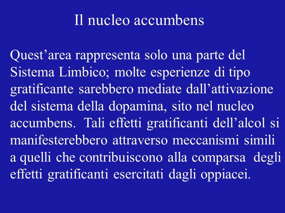 Il nucleo accumbens Quest'area rappresenta solo una parte del. Sistema Limbico; molte esperienze di tipo.