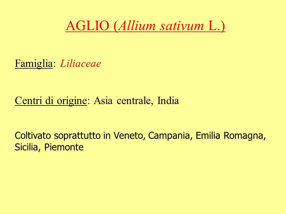 AGLIO (Allium sativum L.)