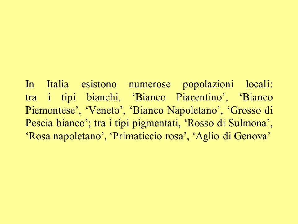 In Italia esistono numerose popolazioni locali: tra i tipi bianchi, 'Bianco Piacentino', 'Bianco Piemontese', 'Veneto', 'Bianco Napoletano', 'Grosso di Pescia bianco'; tra i tipi pigmentati, 'Rosso di Sulmona', 'Rosa napoletano', 'Primaticcio rosa', 'Aglio di Genova'
