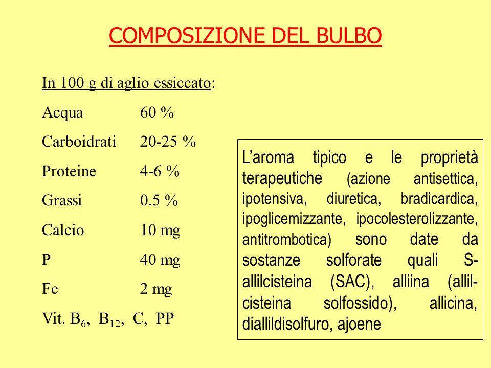 COMPOSIZIONE DEL BULBO