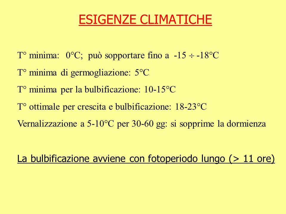 ESIGENZE CLIMATICHE T° minima: 0°C; può sopportare fino a -15  -18°C. T° minima di germogliazione: 5°C.