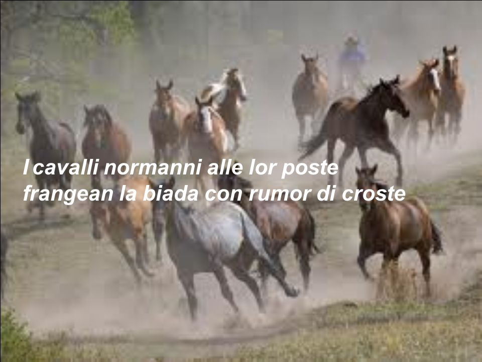 I cavalli normanni alle lor poste frangean la biada con rumor di croste
