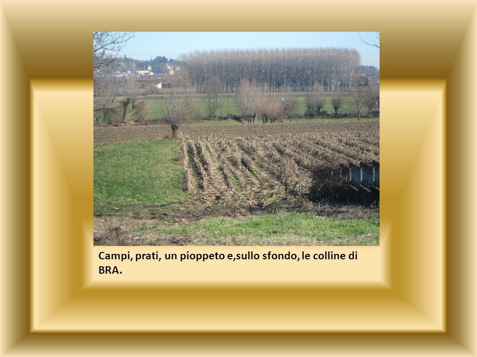 Campi, prati, un pioppeto e,sullo sfondo, le colline di BRA.