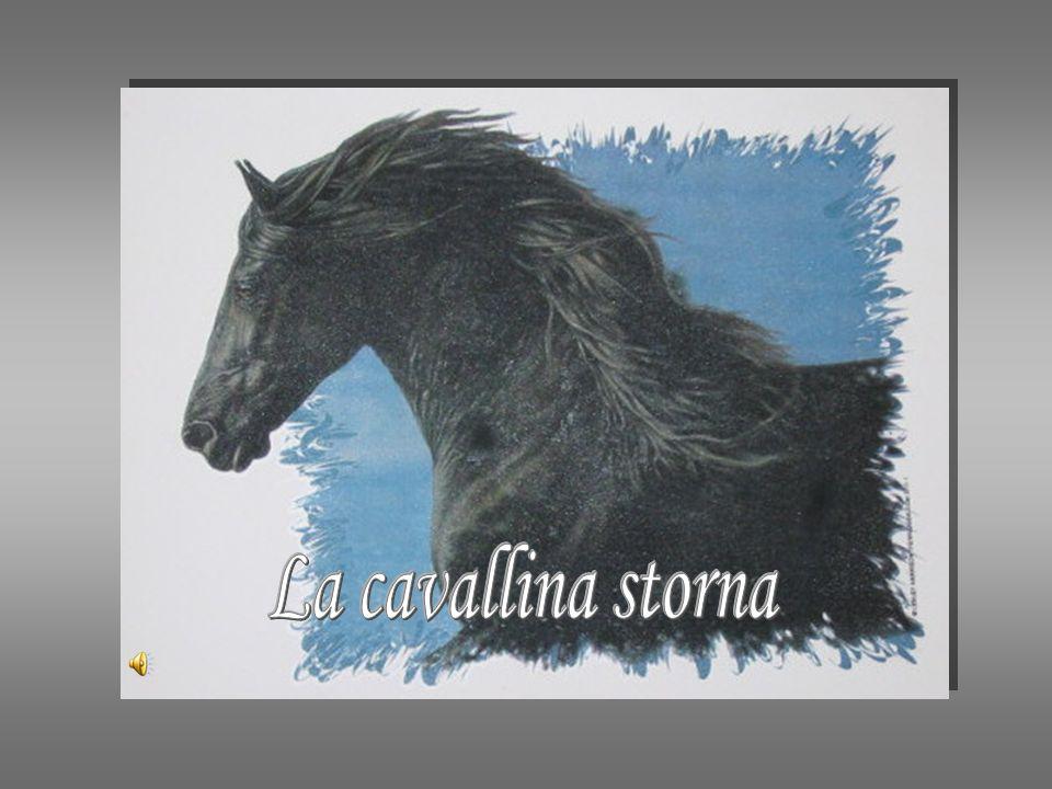 La cavallina storna